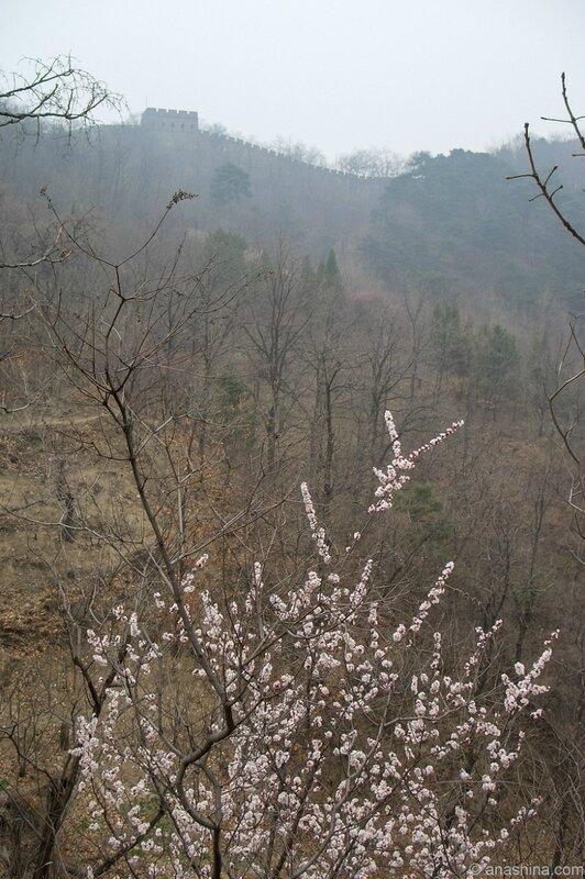 Сакура, Великая китайская стена, Мутяньюй