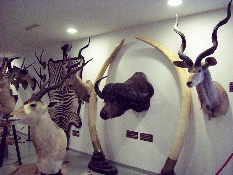 Музей охоты во дворце Фештетичей