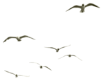 птицы.png