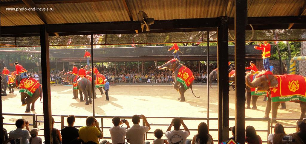 10. Если вы поедете на экскурсию в ботанический сад Нонг Нуч в Паттайе, очень рекомендую остаться и посмотреть шоу слонов. Как мы ездили в Таиланд самостоятельно.