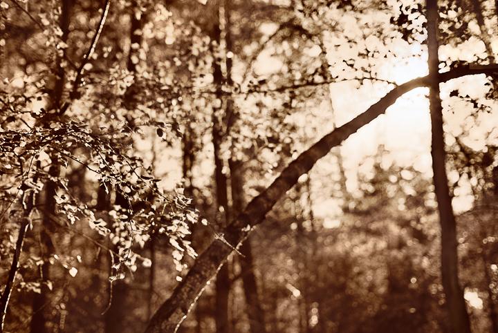 красивые фото пейзажей средней полосы