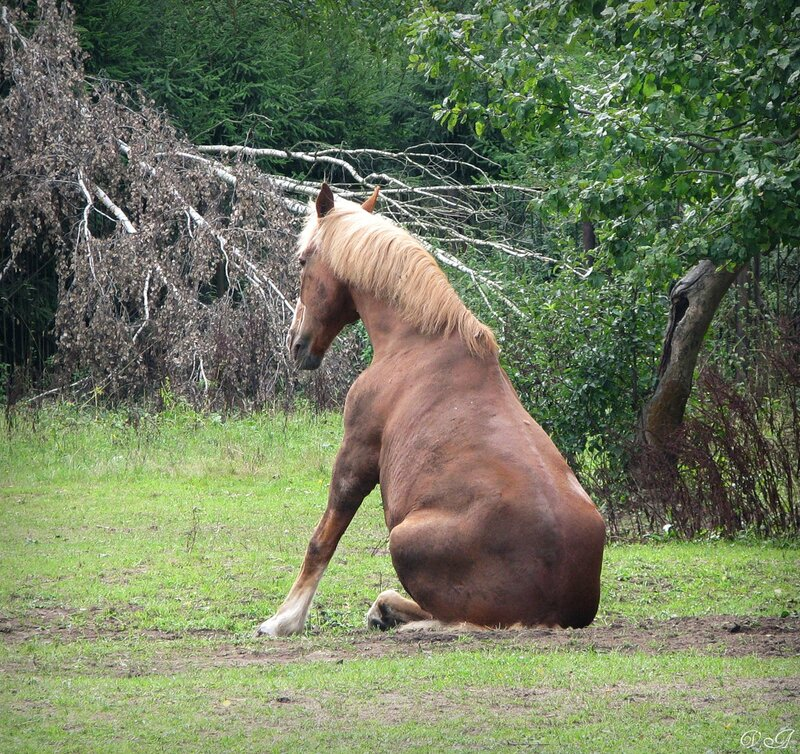 яндекс фото лошади 4