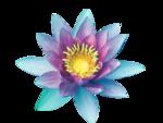 line_lotus_element53.png