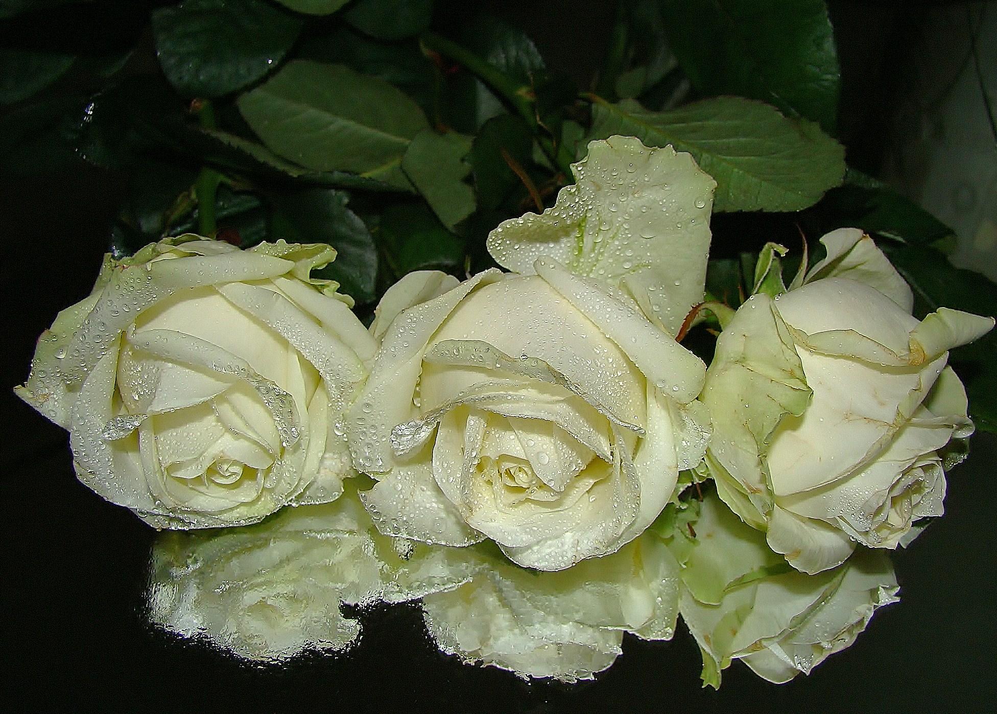 важности развития движущиеся картинки букеты белые розы порция