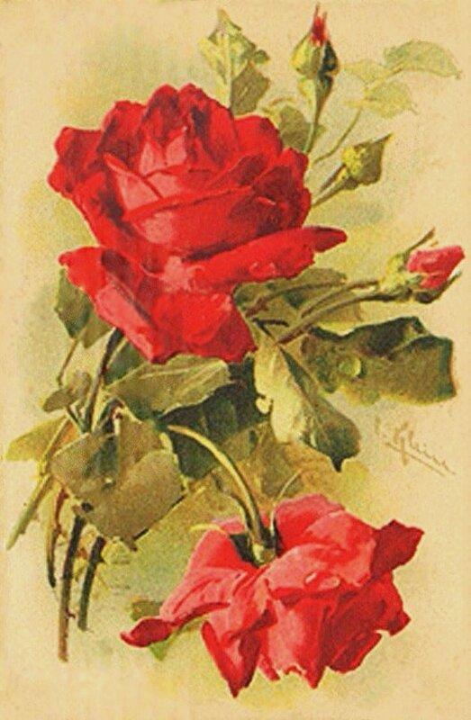 К. Кляйн.                                                         11.  Две розы и три бутона.