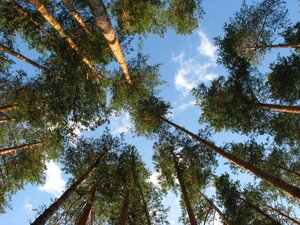 Лес и небо © Алексей Донской