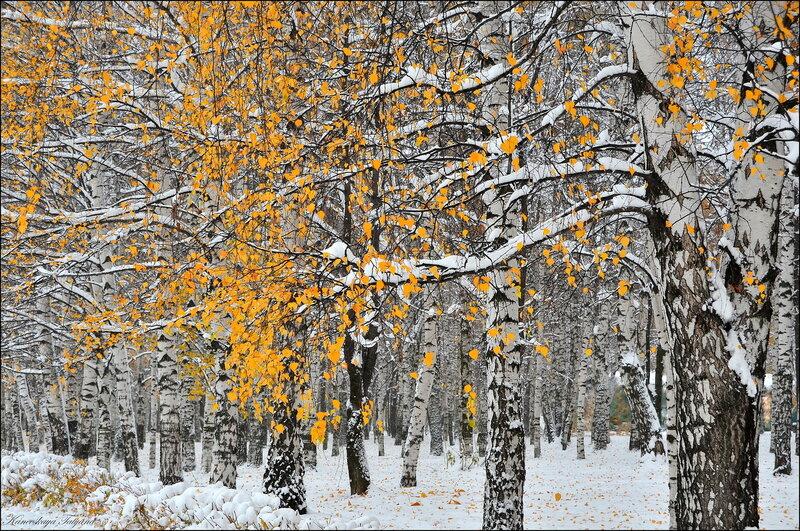 Зимняя осень...