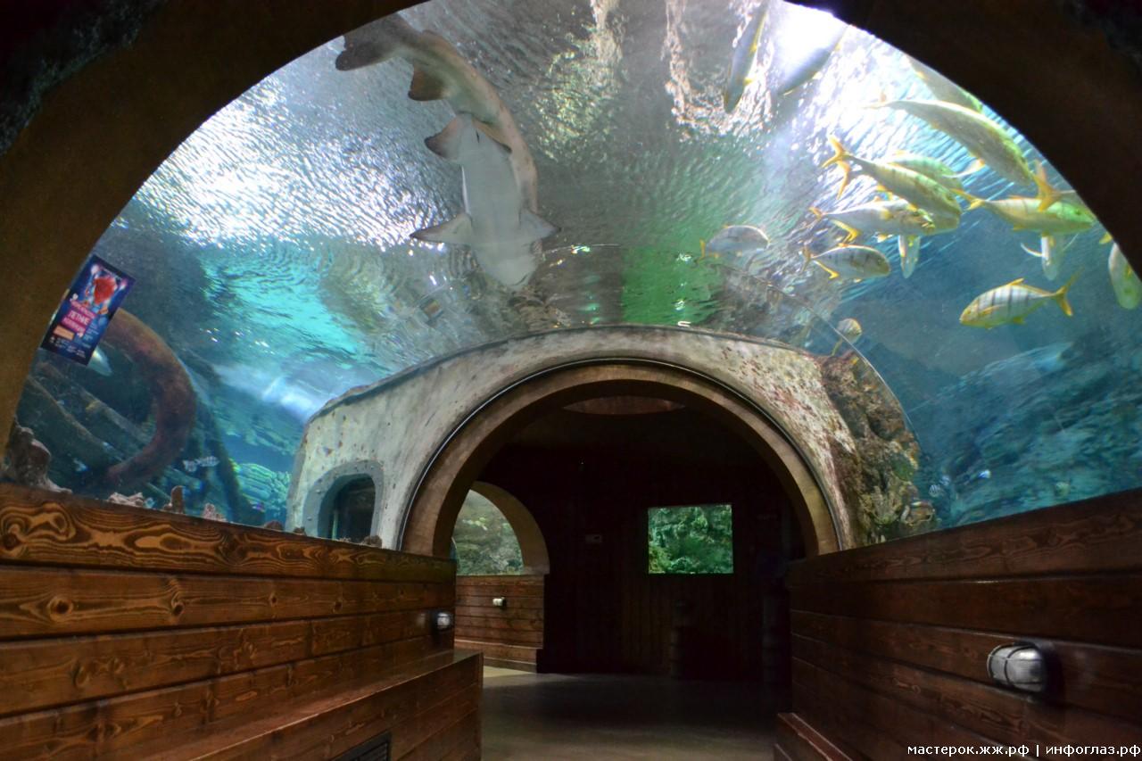 Воронеж океанариум фото отгорожено волнорезами