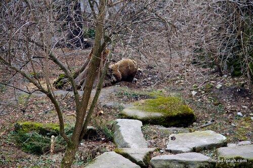 чески-крумлов, чехия, ров, медведи