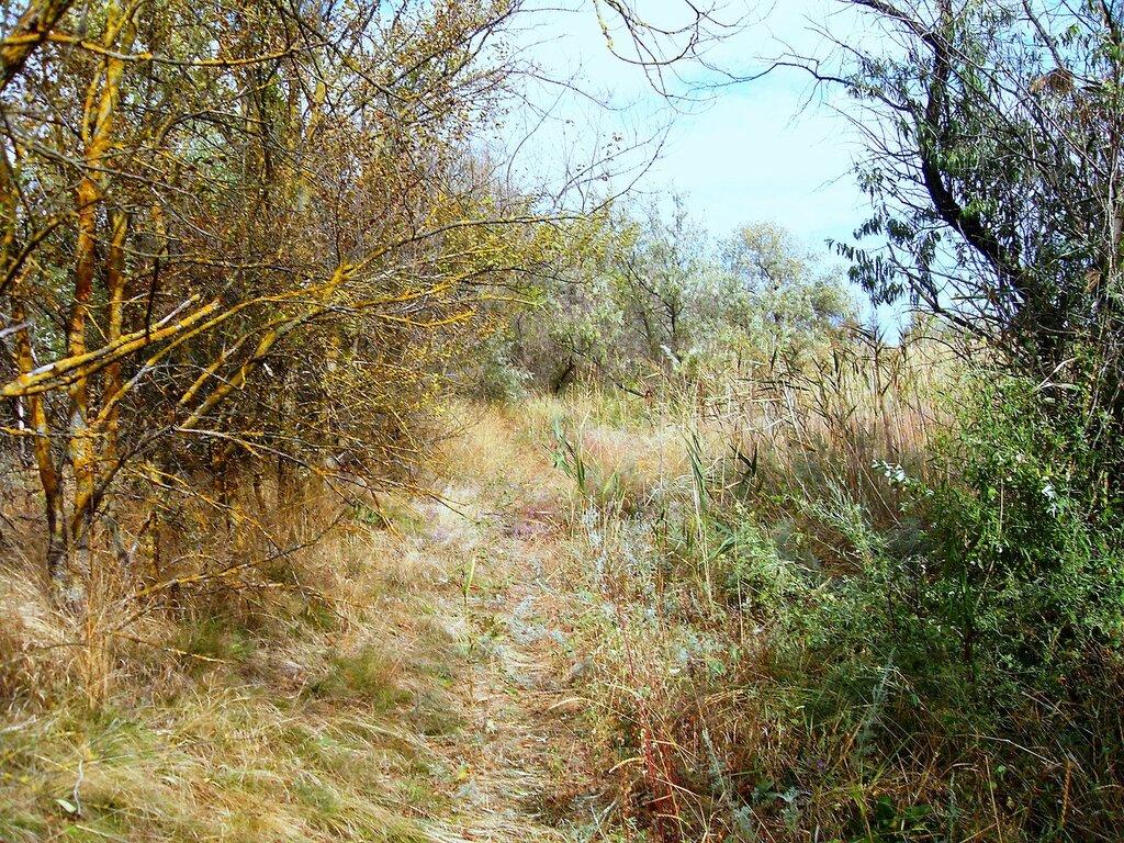В лесу на косе ... SDC14860.JPG