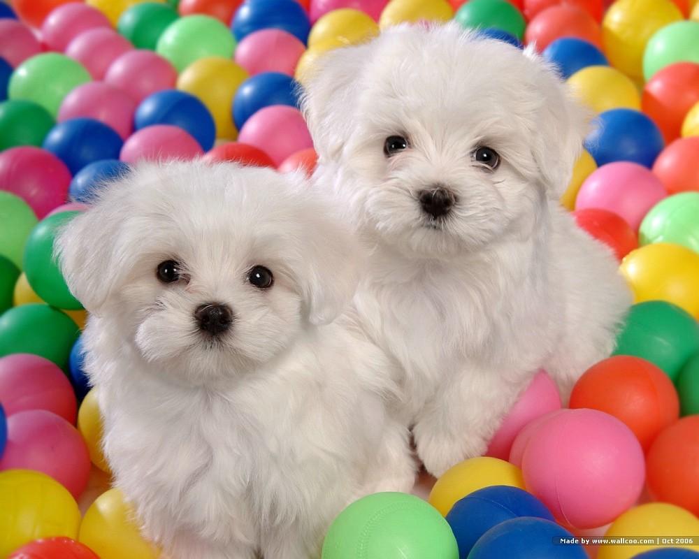white baby dog