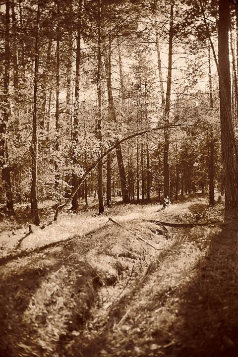 пейзажная фотосъемка леса и ландшафтов средней полосы России