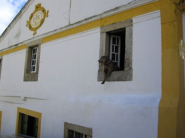 Calm dog window Portugal Evora animal nature