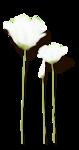 Lily_Spring_el24sh.png
