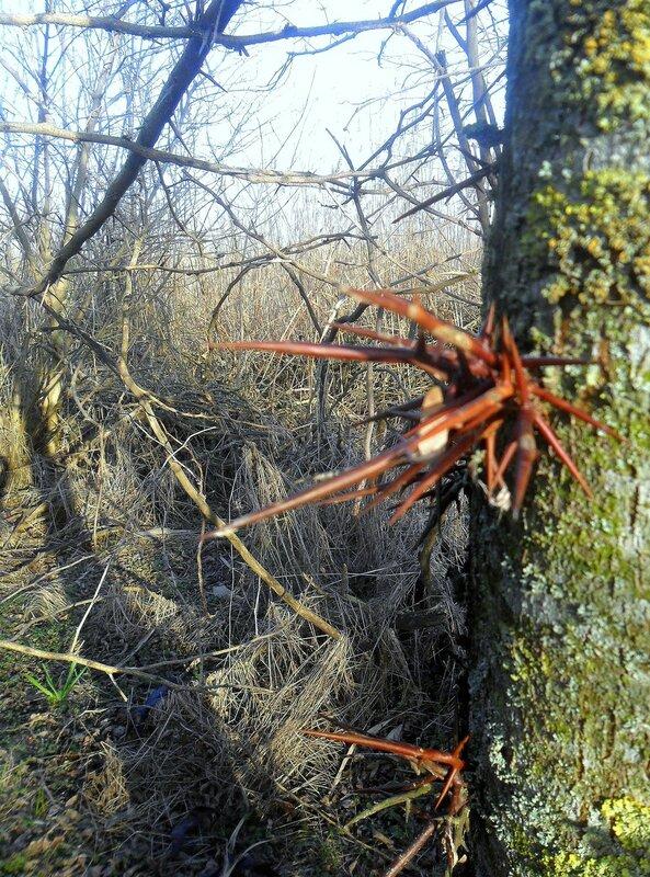 Защита дерева ...SAM_5531.JPG