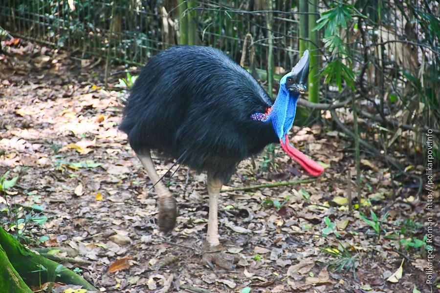 0 c4fc4 e9e81583 orig Парк птиц Jurong в Сингапуре