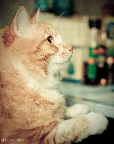 Кошки в Москве