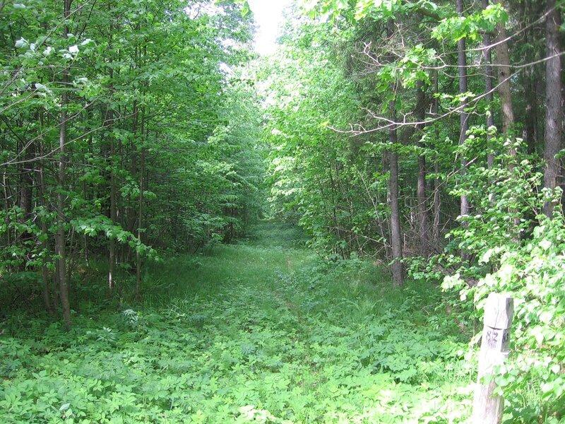 лесной столбик летом