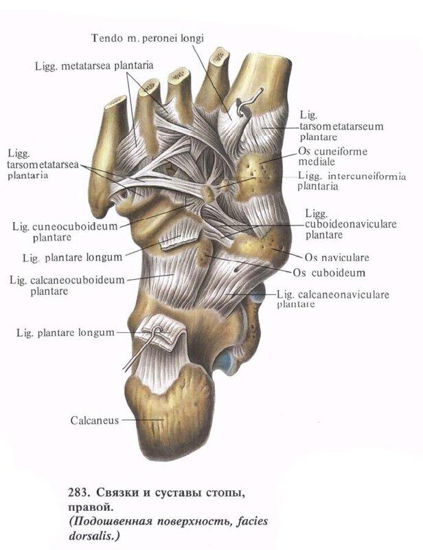 Что принимать при онемении и болях в ногах