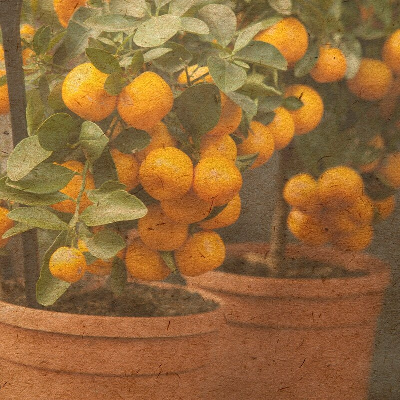 card with orange tree
