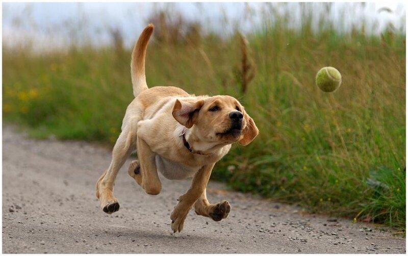Dog8 A Dog Mans Best Friend.