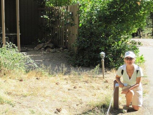 Дикий олень зашел в коттедж в парке Йосемити, США