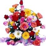 цветы(анимация)31