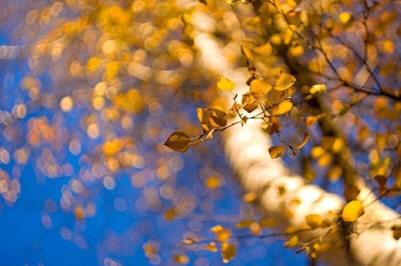 Осенние фотографии