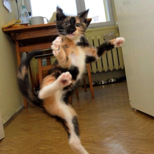 смешные картинки изворотливая кошка