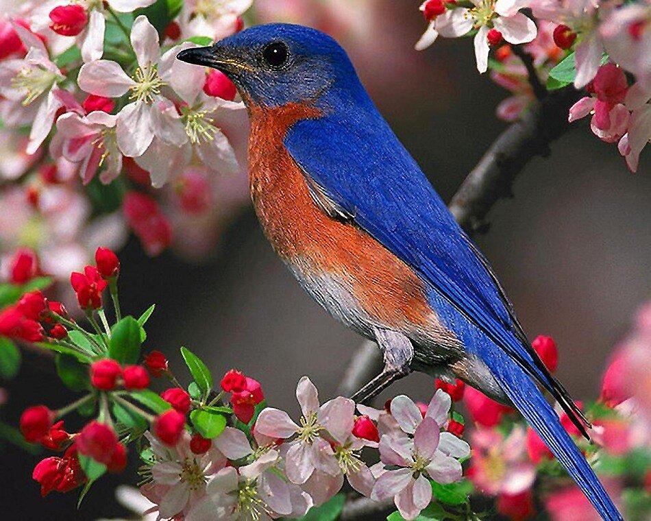 Китайская пословица. на нее сядет поющая птица.
