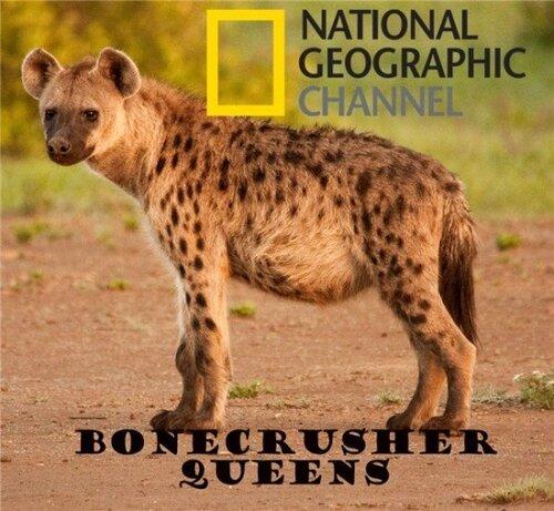 National Geographic: Гиена. Царица хищников / Bonecrusher Queens | Смотреть онлайн / Скачать (документальные фильмы)(животный мир)