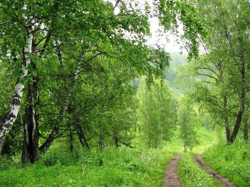 Летом в Горном Алтае