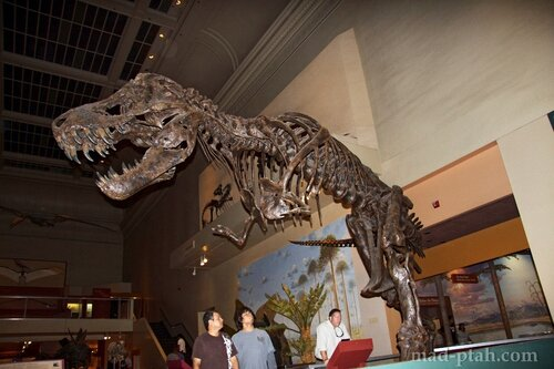 T-Rex, скелет тирранозавра в музее естественной истории, вашингтон, сша