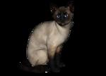 сиамские кошки (9).png