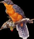 Птицы  разные  0_564d5_d838bd3a_S
