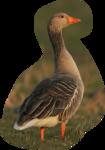 Птицы  разные  0_51c96_6f07895_S