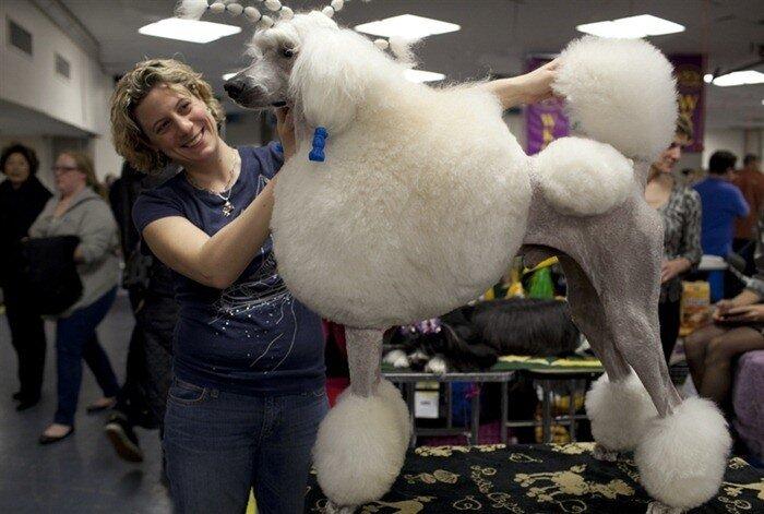 фото выставка собак