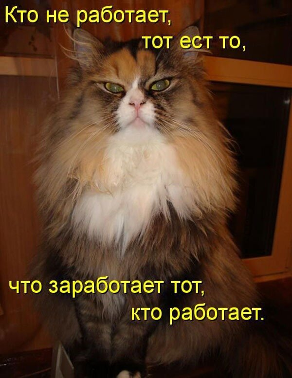 http://img-fotki.yandex.ru/get/4512/vasni76.a/0_51a9d_146d19ee_XL