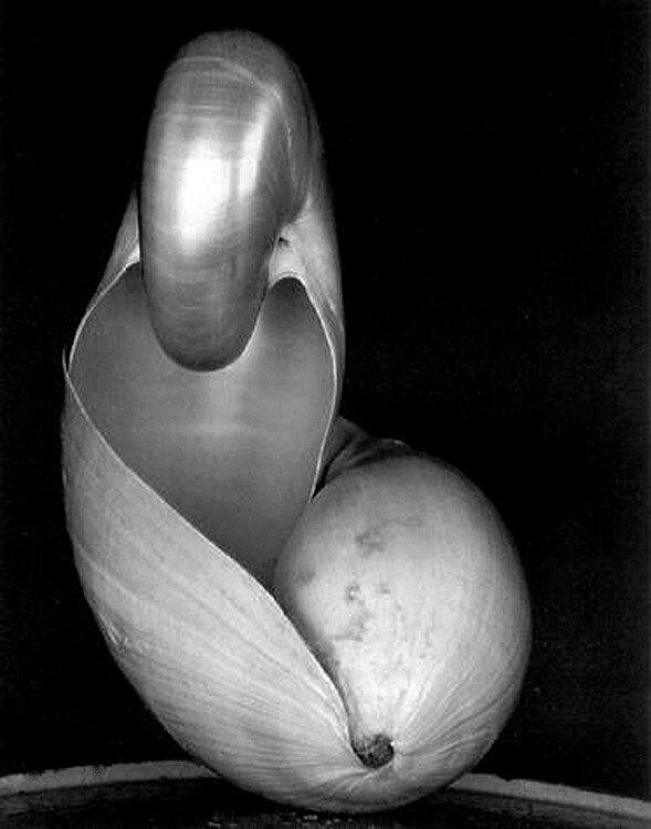 Edward Weston, Shells