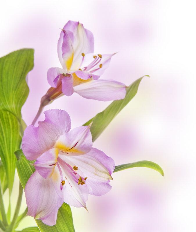 Вертикальные картинки цветы красивые, музыкальные открытки смешные