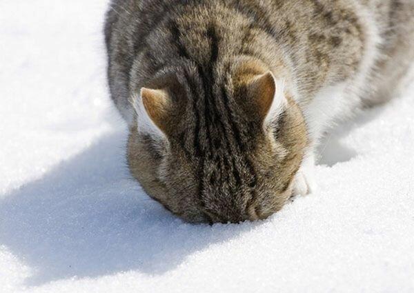 Снег прет котов не меньше валерьянки