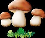 грибочки (7).png