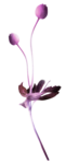 Purple charm_YalanaDesign (34).png