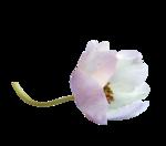 Purple charm_YalanaDesign_freebie (1).png