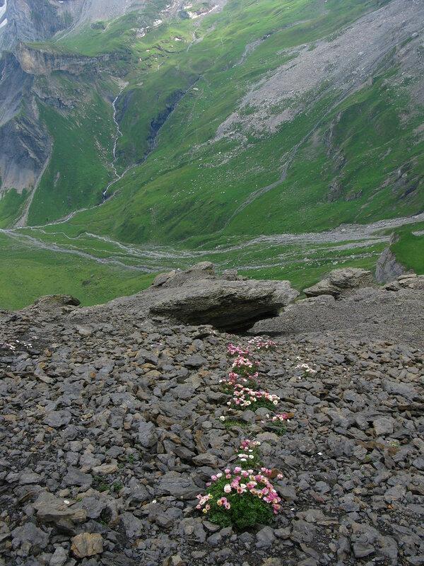 Похоже на дорогу фейри:) Внезапные цветы в высокогорье