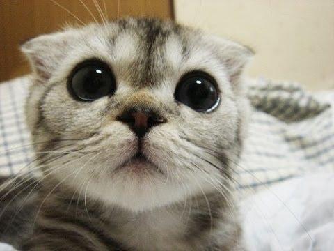 У кошки гноятся глаза фото