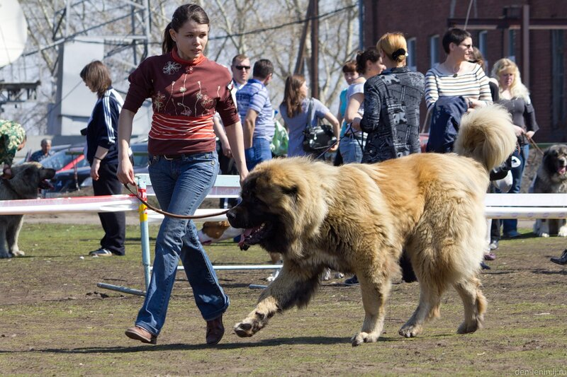 """На стадионе """"Спартаковец"""" состоялась выставка собак."""