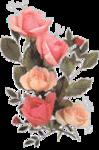 rosenrosa009.png