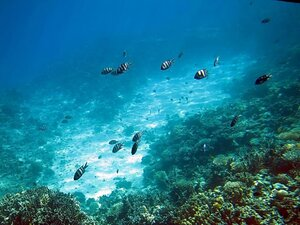 Коралловый риф в Рас Мохаммеде