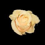 «doniar-HappySpring-pELEMENTY» 0_54fde_75ae8a37_S
